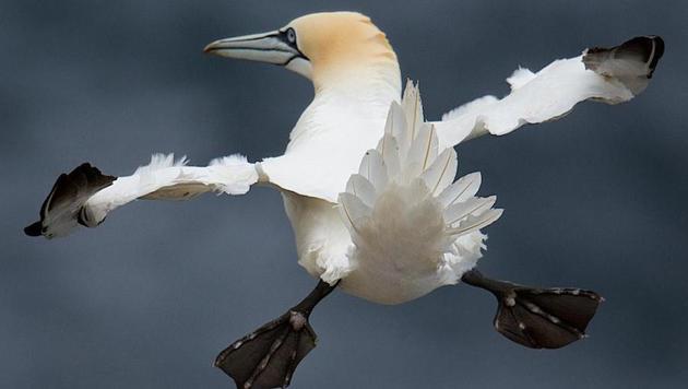 Das sind die witzigsten Tierfotos des Jahres (Bild: Charlie Davidson/Comedy Wildlife Photography Awards)