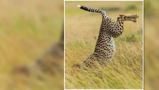 Das sind die witzigsten Tierfotos des Jahres (Bild: Mohammed Alnaser/Comedy Wildlife Photography Awards)