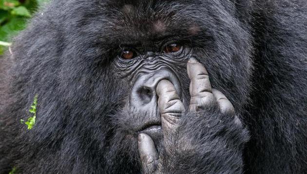 Das sind die witzigsten Tierfotos des Jahres (Bild: Oliver Dreike/Comedy Wildlife Photography Awards)