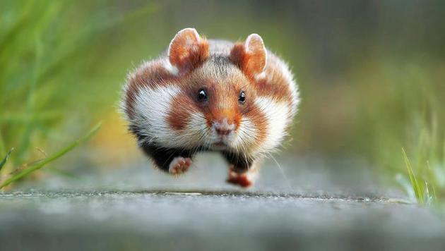 Das sind die witzigsten Tierfotos des Jahres (Bild: Julian Rad/Comedy Wildlife Photography Awards)
