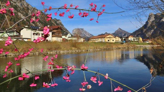 Gestern war an der Traun bei Ebensee noch eher Frühling als Herbst, ab heute wird sich das ändern (Bild: Marion Hörmandinger)