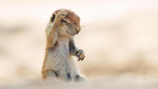 Das sind die witzigsten Tierfotos des Jahres (Bild: Yuzuru Masuda/Comedy Wildlife Photography Awards)