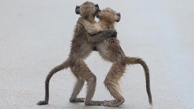 Das sind die witzigsten Tierfotos des Jahres (Bild: Tony Dilger/Comedy Wildlife Photography Awards)