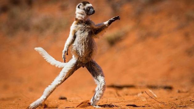 Das sind die witzigsten Tierfotos des Jahres (Bild: Alison Buttigieg/Comedy Wildlife Photography Awards)