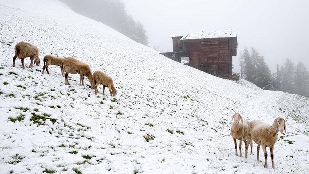 Winterwetter: Minusgrade und ein bisschen Schnee (Bild: APA/EXPA/JOHANN GRODER)
