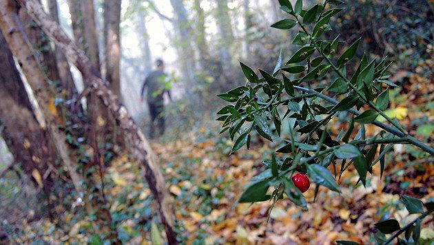 Auf Trüffeljagd in einem Wald in der Nähe von Paladini (Bild: Stephan Schätzl)