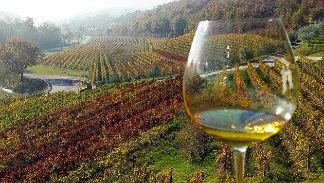 Auf dem Weingut Kozlovic in Momjan (Bild: Marko Markovic)