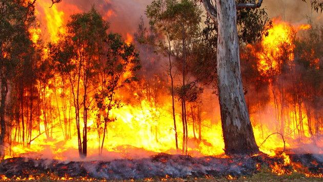 Farm aus 3000 Kilometer Distanz vor Feuer gerettet (Bild: flickr.com/bertknot)