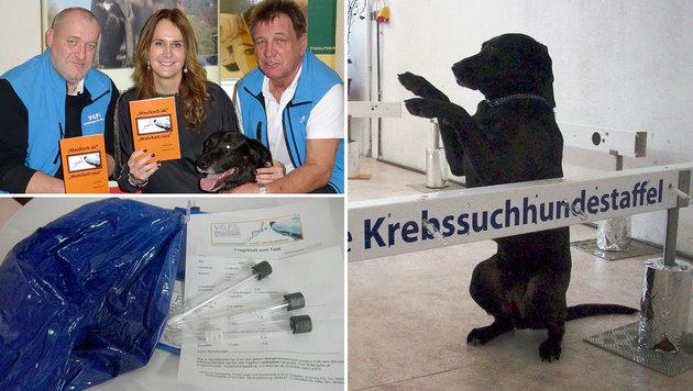 Neues Buch: Hundenasen können Krebs erschnüffeln (Bild: Krebssuchhunde)