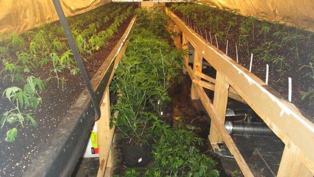 Hanfplantage neben Polizeihundeschule entdeckt (Bild: Polizei)