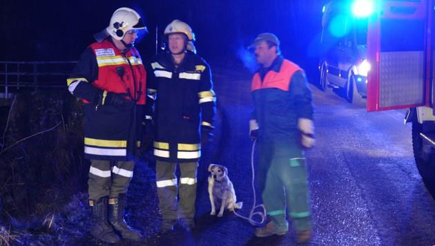 Der Hund konnte gerettet werden. (Bild: AFKDO Lilienfeld/ Manfred Kozmich)