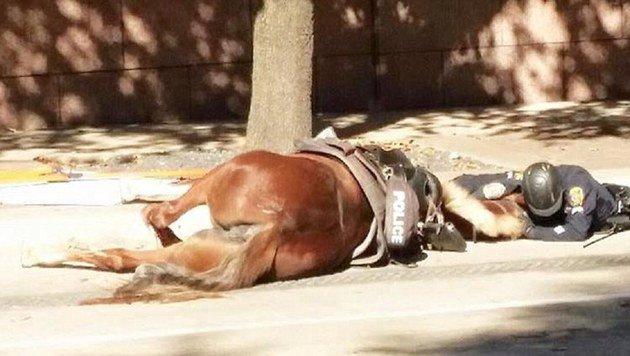 Dieses Bild rührt zu Tränen: Ein Polizeibeamter beruhigt sein sterbendes Pferd. (Bild: facebook.com/Houston Police Department)