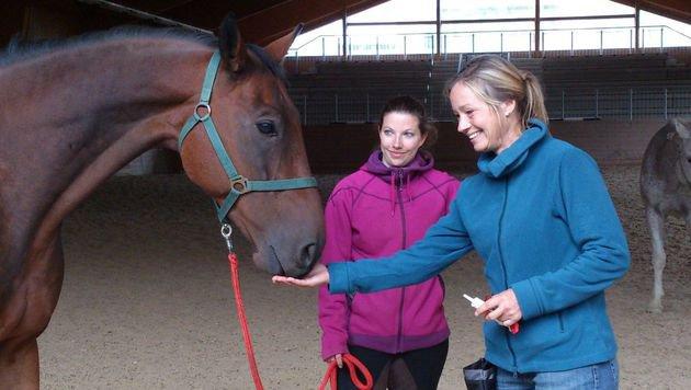 """Verein """"Tiere als Therapie"""" bildet Tiertrainer aus (Bild: Tiere als Therapie)"""