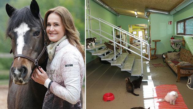 """Maggie Entenfellner mit """"Felicitas"""", das neue Katzenhaus der """"Tierecke"""" (Bild: Klemens Groh, Peter Tomschi)"""