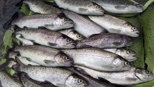 Wenn Fische nicht leiden, schmecken sie besser (Bild: thinkstockphotos.de)