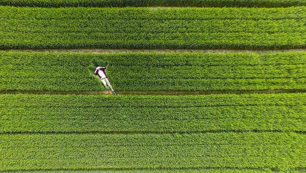 Luftige Aufnahmen: Die besten Drohnen-Bilder (Bild: dronestagr.am/AmbroseLune)