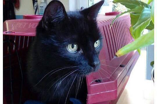 """Kater """"Nico"""" in der Tierherberge Kamp-Lintfort. Jetzt ist er wieder zuhause. (Bild: facebook.com/tierherberge)"""