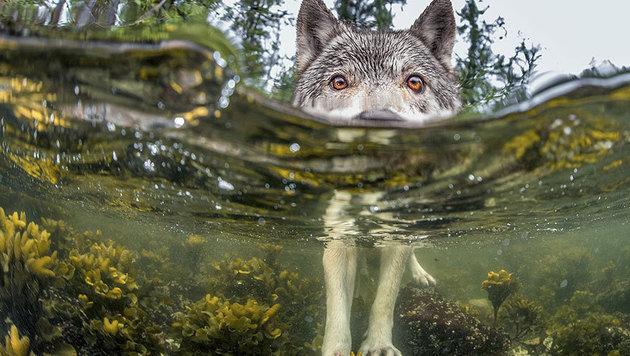 """""""Die 20 besten Fotos aus dem Jahr 2015 (Bild: IAN MCALLISTER / National Geographic)"""""""