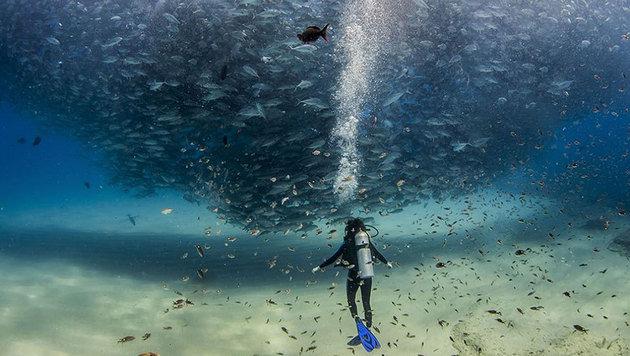"""""""Die 20 besten Fotos aus dem Jahr 2015 (Bild: Jeff Hester - yourshot.nationalgeographic.com/profile/661)"""""""