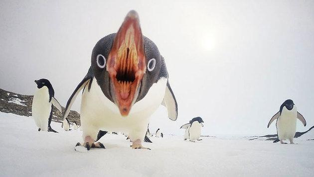 """""""Die 20 besten Fotos aus dem Jahr 2015 (Bild: Sea Berry - yourshot.nationalgeographic.com/profile/94586)"""""""
