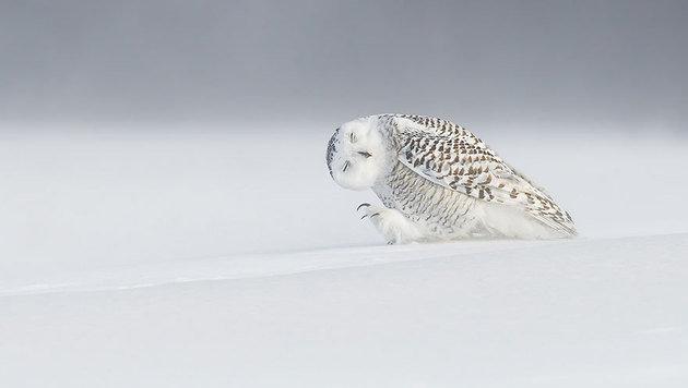 """""""Die 20 besten Fotos aus dem Jahr 2015 (Bild: Dominic Roy - yourshot.nationalgeographic.com/profile/563)"""""""