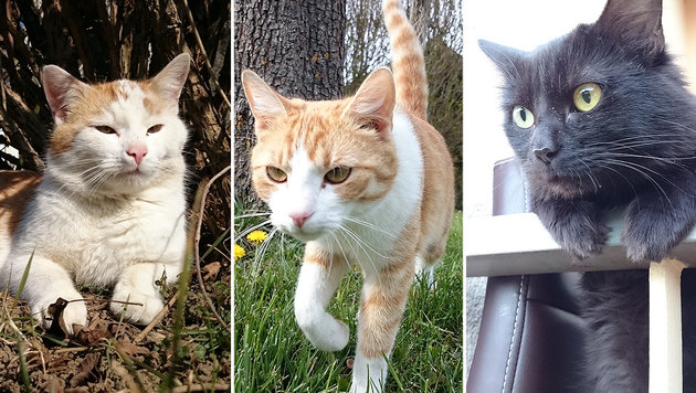 """""""Pearl"""" (links) und """"Boobi"""" (rechts) bleiben verschwunden - wer hat sie gesehen? (Bild: Familie Gahr)"""