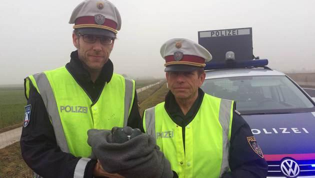"""Für viele """"nur"""" eine verirrte Taube, doch für diese Polizisten war der Vogel ein Tier in Not. (Bild: Andrea Specht)"""