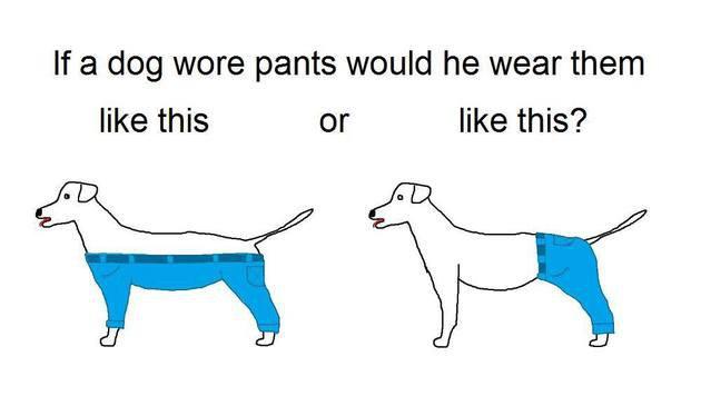"""Diese Grafik löste eine Welle an Reaktionen aus - """"Wie würde ein Hund eine Hose tragen?"""" (Bild: facebook.com/Utopian Raspberry - Modern Oasis Machine)"""