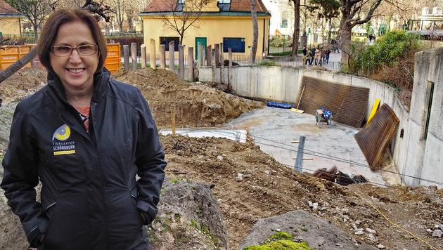 Tiergartendirektorin Dagmar Schratter vor der Baustelle des neuen Elefanten-Badebeckens. (Bild: APA/Tiergarten Schönbrunn)
