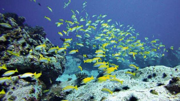 Seychellen: Untertauchen im Paradies (Bild: Irene Kain)
