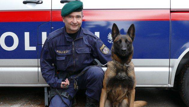 """Polizeidiensthund """"Tarzan"""" fand den zweiten Koffer im Traunsee. (Bild: LPD OÖ)"""