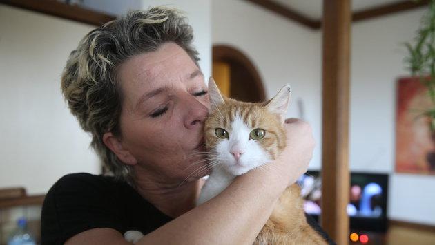 """Erholt sich jetzt liebevoll umsorgt von ihrer Familie: Katze """"Misty"""" (Bild: Sepp Pail)"""