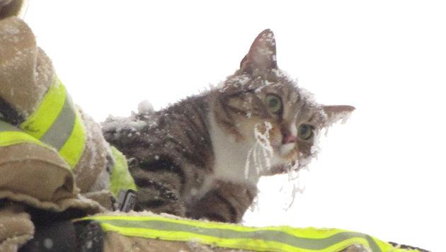 Halb erfrorene Katze von morschem Baum gerettet (Bild: APA/FF HARTBERG)