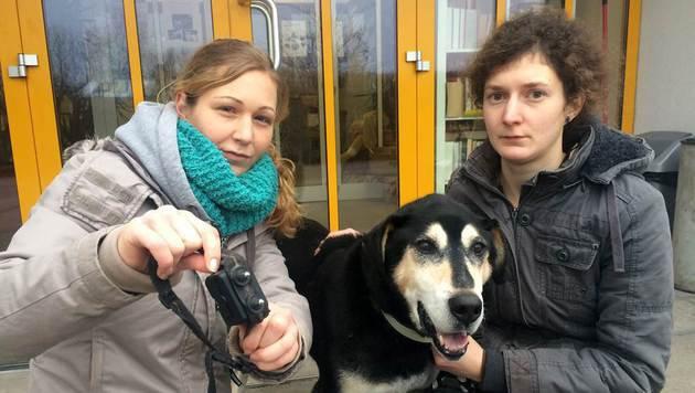 """Kathi Sonnleitner (li.) und Isabella Schmidl vom Kremser Tierheim (NÖ) mit dem armen """"David"""". (Bild: Andrea Specht)"""