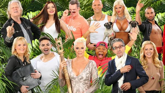Die zwölf Dschungelcamper stehen fest! (Bild: RTL)