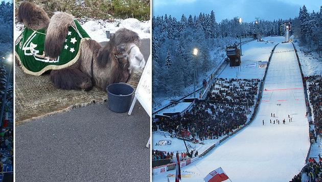 Adler-Fan wollte mit DIESEM Kamel zu Skispringen! (Bild: Ski-Club Willingen, GEPA)