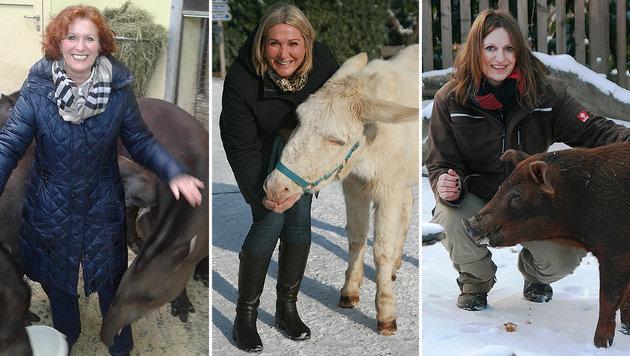 """Die """"Krone"""" als Patin von Esel, Schwein und Tapir (Bild: Tierpark Herberstein)"""