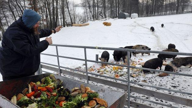 Pfotenhilfe bittet um Futterspenden für 400 Tiere (Bild: Verein Pfotenhilfe)