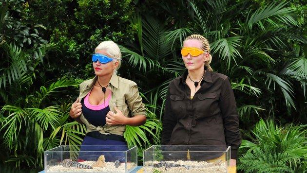 Sophia Wollersheim und Helena Fürst bei der Dschungelprüfung (Bild: RTL)