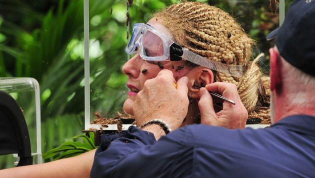 Dr. Bob muss das Getier aus dem Ohr holen. (Bild: RTL)