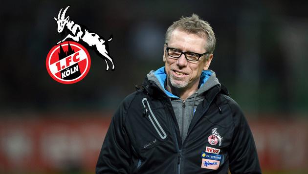 Fix! Stöger verlängert Vertrag beim 1. FC Köln (Bild: GEPA)