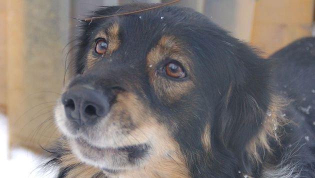 Tierheim klagt: Kein Geld für Hoarding-Hunde (Bild: Tierparadies Schabenreith)