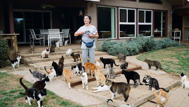 Lynea Lattanzio mit ihren Schützlingen (Bild: twitter.com/cathouseotkings)