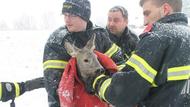 Helfer retten Reh aus eiskaltem Bach (Bild: Presseteam der Feuerwehr Wiener Neustadt)