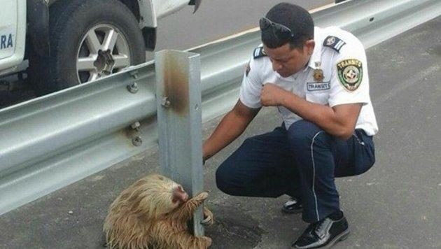 Auch ein Verkehrspolizist kümmerte sich um das Tier. (Bild: Comisión de Tránsito del Ecuador)