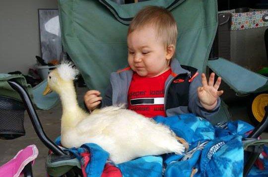 Wahre Freunde: Bub und Ente sind unzertrennlich (Bild: facebook.com/Mr. T and Bee: A Tale of a boy and His Ducks)