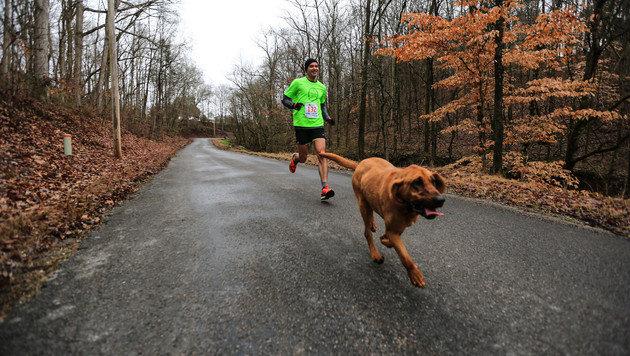 Hündin mischt sich unter Halbmarathon - 7. Platz! (Bild: We run Huntsville/April de Bois Hamlin)