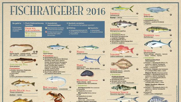 Greenpeace-Ratgeber als Hilfe beim Fischeinkauf (Bild: Greenpeace)
