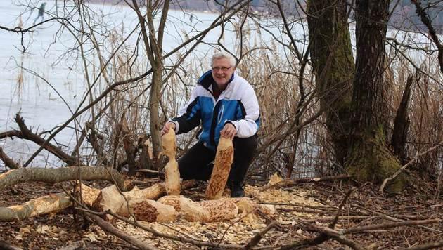 Der Keutschacher Thomas Koban hat die nagenden Baumeister bei ihrer nächtlichen Arbeit gefilmt. (Bild: Evelyn Hronek)