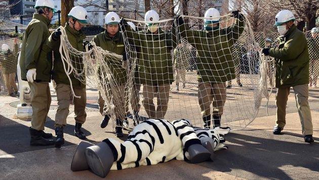 Notfallübung mit Plüsch-Zebra in Tokioter Zoo (Bild: APA/AFP/Kazuhiro Nogi)